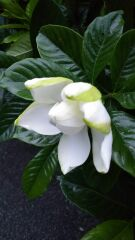 白い花をもうひとつ