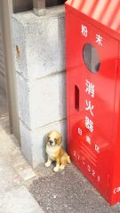 小さな番犬