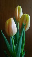 花を飾って