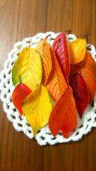 秋の色を召し上がれ!