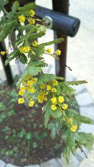 春の花、続々と
