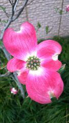 ハート型の花びら